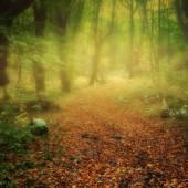 a misty path - photo by darko ivancevic