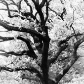 treetop - photo by darko ivancevic